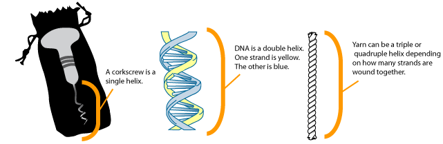 Dna Double Helix Labeled Helical region labeled.