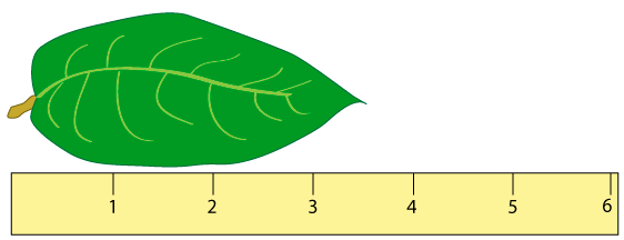 Life Sciences Cyberbridge. On The Other Hand If You Measured Same Leaf With A Ruler That Had Markings Every Millimeter Mm As Drawn Below Can See End Of. Worksheet. Worksheet 2 Significant Figures And Measurement At Mspartners.co